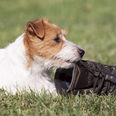 Teaser zu Online Hundetraining im Urlaub