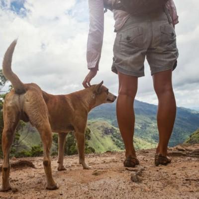 Teaser zu Wandern mit Hund in Sachsen