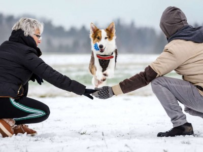 Hund spring über ausgestreckte Arme. Foto Zeigt zwei zwei Menschen und einen Hund auf einem Schneebedeckem Feld. Ferienhaus mit Hund